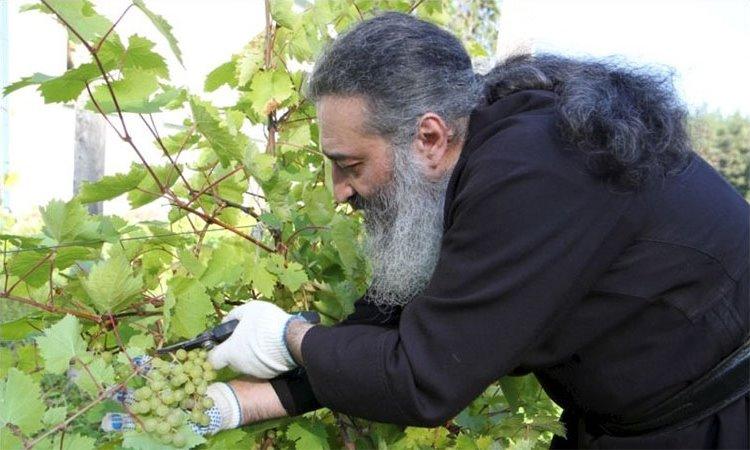 Виноградник Валаамского монастыря